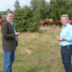 Mathias Zimmermann und Michael Grosse-Brömer vor de r Rinderherde des VNP